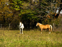 Horses in a ranch Stock Photo