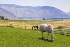 Horses  at ranch Stock Photography
