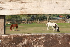 Horses in a ranch Royalty Free Stock Image
