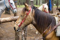 Horses in Rancho Nuevo. Park in Chiapas, Mexico Royalty Free Stock Photos
