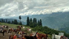 Horses are ready to get tourists to nearby mountain peaks at pai meadows stock photos