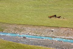 Horses resting near blue river Stock Photography