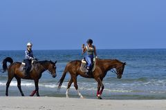Beach horses royalty free stock photos