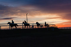 Horses Riders Silhouetted Colors Landscape. Race horses riders early dawn training silhouetted colors on track landscape Royalty Free Stock Image