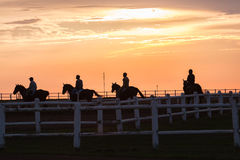 Horses Riders Silhouetted Morning. Race horses riders early morning training silhouetted colors on track landscape Stock Image
