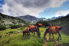Horses in Rila Royalty Free Stock Photo