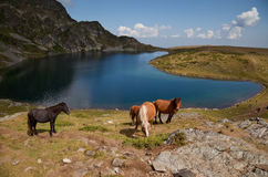 Horses by the Rila mountains lake. Horses are grazing by one of the seven Rila mountains lake, called �the kidney royalty free stock photography