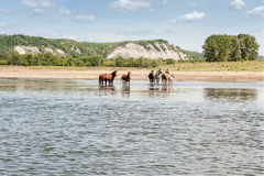 Horses at the river. On mountains and blue sky background royalty free stock photo
