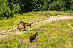 Horses by the road at the forest edge Royalty Free Stock Image