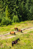 Horses by the road at the forest edge Stock Image