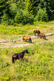 Horses by the road at the forest edge Royalty Free Stock Images