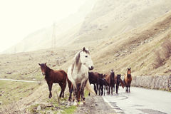 Horses on a road Stock Image