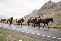 Horses on a road Stock Photo