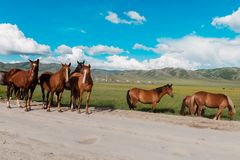 Horses are on the road. Behind the mountain landscape stock photos