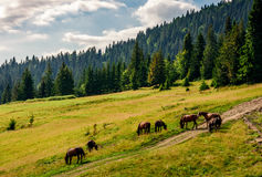 Horses by the road near the forest Stock Images