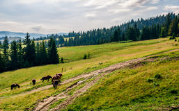 Horses by the road near the forest Royalty Free Stock Image