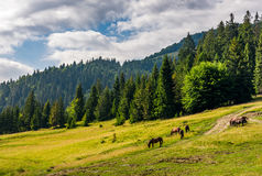 Horses by the road near the forest Royalty Free Stock Images