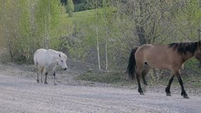 Horses on the road in village stock video