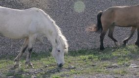 Horses on the road in village stock video footage