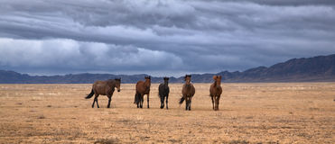 Horses roaming land Royalty Free Stock Photo