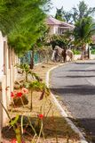 Horses roaming in St Martin Stock Image