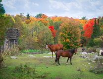 Horses in Rocky field Autumn Royalty Free Stock Photography