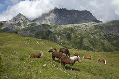 Horses with Rote Wand range Royalty Free Stock Image