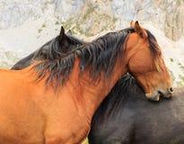 Horses. Route through the wonderful places of the Picos de Europa Royalty Free Stock Photos