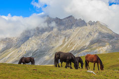 Horses. Route through the wonderful places of the Picos de Europa Stock Image
