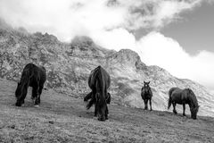 Horses. Route through the wonderful places of the Picos de Europa Stock Images
