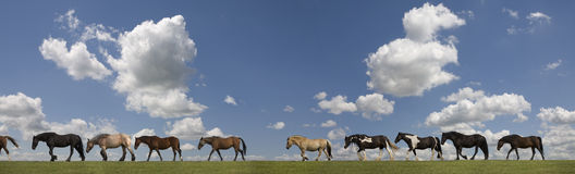 Horses  one behind the other Royalty Free Stock Photo