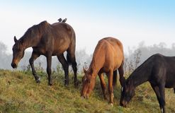 Horses in a row stock images