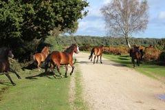 Horses run 2 Royalty Free Stock Photo