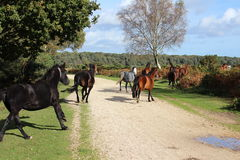 Horses run 3 Royalty Free Stock Images