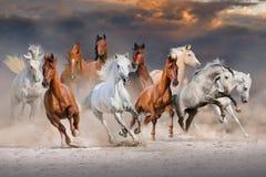 Horses run fast. Horse herd run fast in desert dust against dramatic sunset sky stock photo