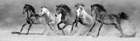 Horse herd in motion royalty free stock images