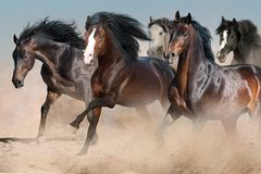 Horses run fast royalty free stock photos