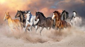 Horses run free. Horse herd run gallop in desert dust against dramatic sky stock photography