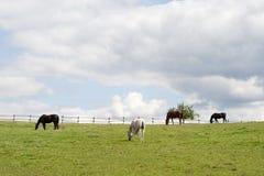Horses run free on paddock stock images