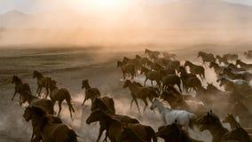 Horses run gallop in dust stock photo