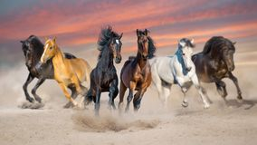 Horse herd run in sand stock image