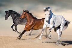 Horses run gallop. In desert against sky royalty free stock image