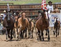 Horses on the Run Royalty Free Stock Image