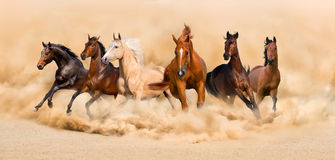 Horses run Royalty Free Stock Photo