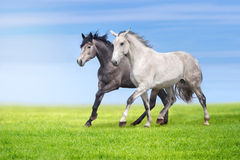 Horses run in pasture Royalty Free Stock Images