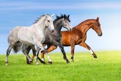 Horses run in pasture royalty free stock image