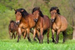 Horses run on pasture Royalty Free Stock Photos