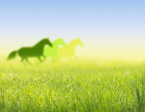 Horses run on spring field silhouette Royalty Free Stock Photography