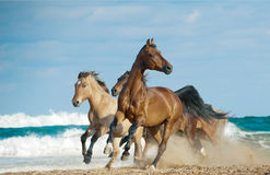 Horses run in a wild Royalty Free Stock Photos