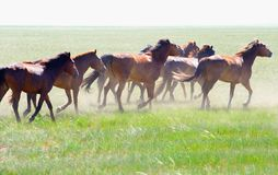Horses Running. / summer meadow / nature Stock Photos